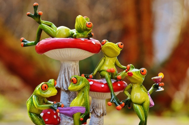 frogs-1176219_960_720